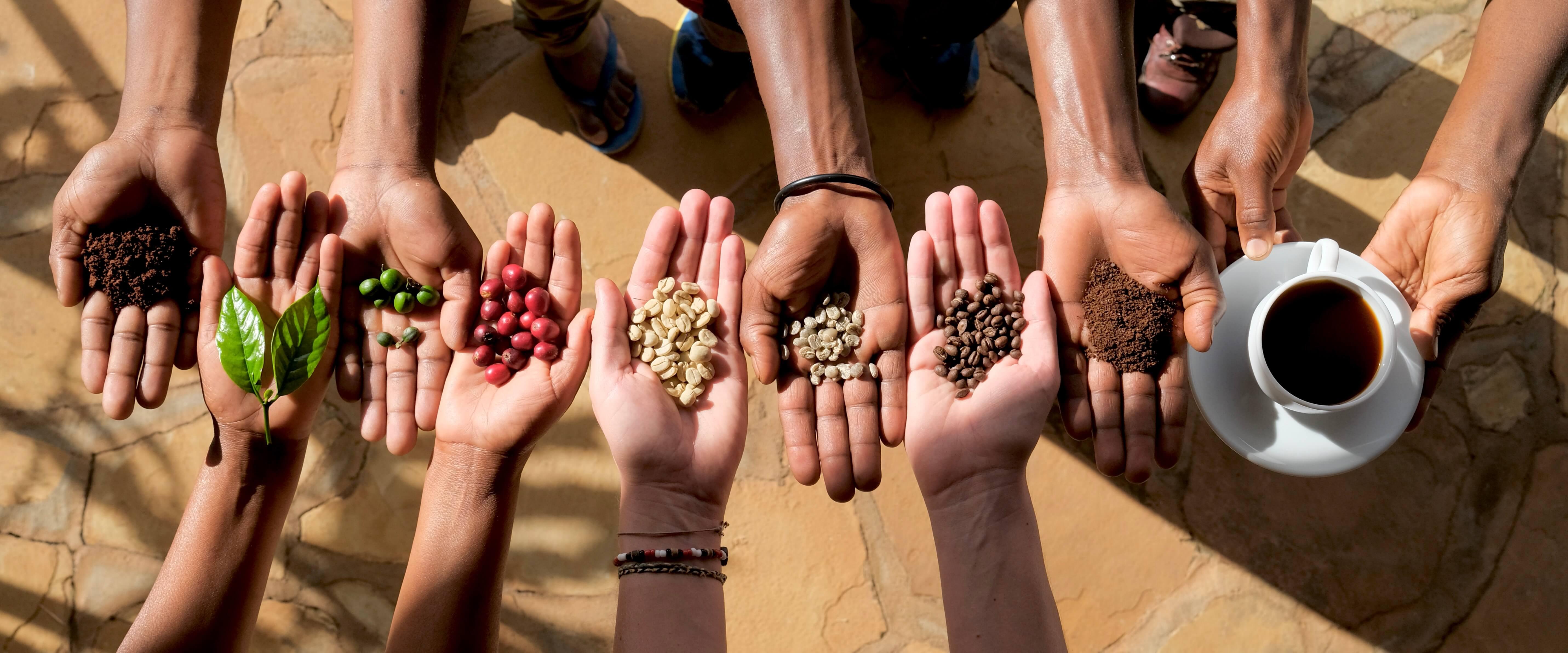 Kaffe fra jord til bord: Vi går meget op i at vi har fuld kontrol over kaffens rejse fra den er en lille kaffeplante, til der står en færdig  kop kaffe på bordet