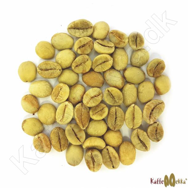 Indien Robusta Parchment AB, Grønne Bønner 1000 gram